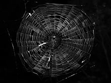 Typical-orb-web-photo.jpg